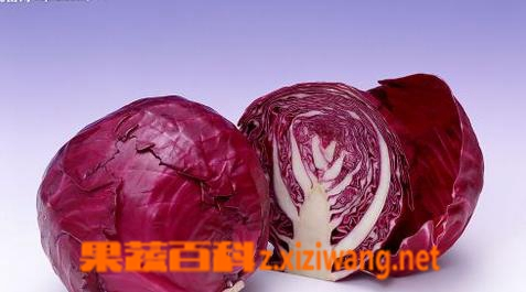 果蔬百科紫甘蓝的营养价值和功效